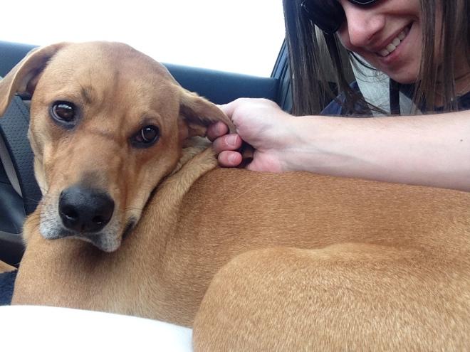 42-lb lap dog